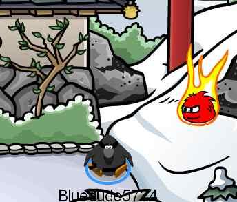 flaming puffle dojo